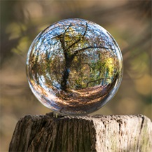 Tree reflected in glass ball