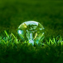 greenlight bulb
