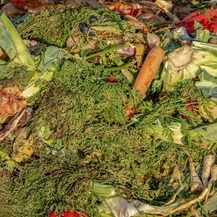 compost and food waste