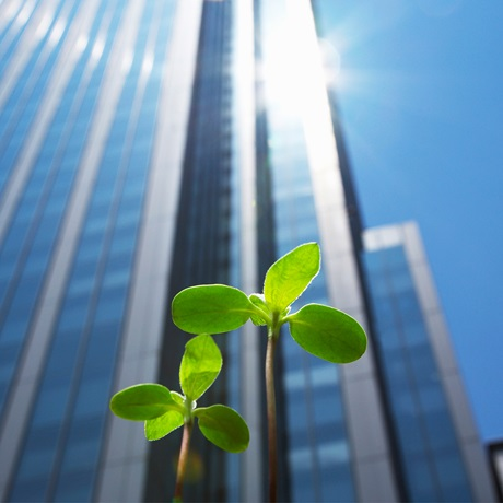 Seedling in front of skyscraper