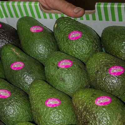 Avocadoes; supply system resilience