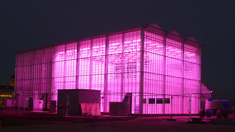Glasshouse at night