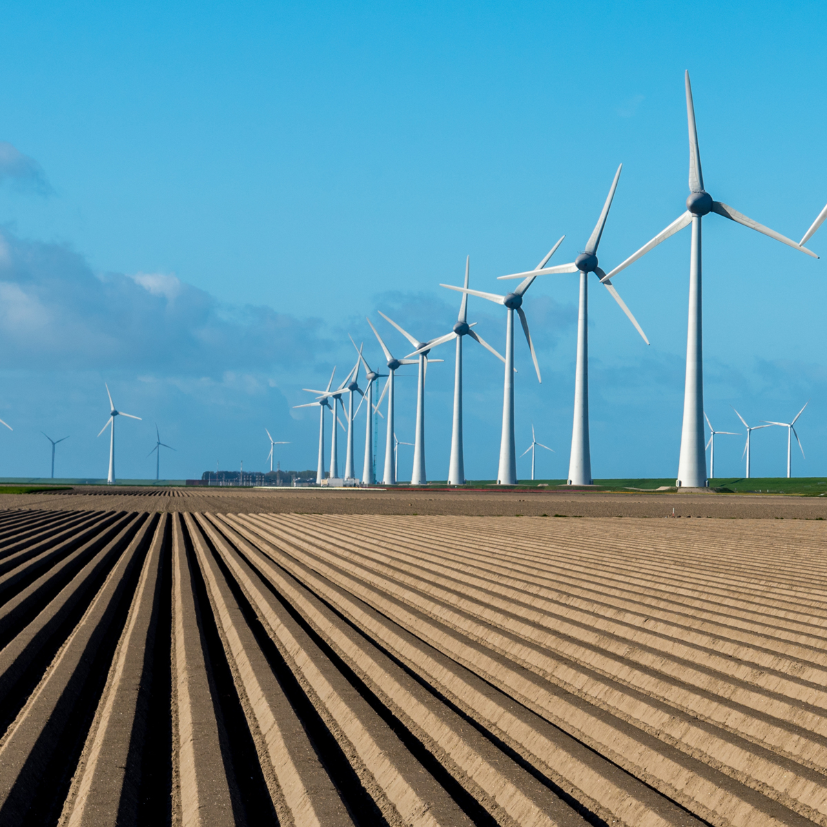 Line of wind turbines next to crop field