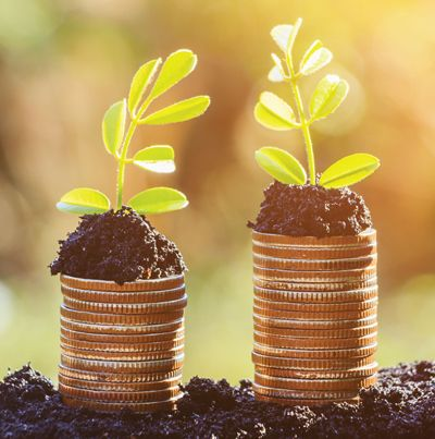 Crops growing on money